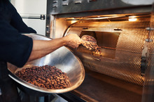 Chocolate Making Factory Worker Putting Cocoa Beans Into A Roaster