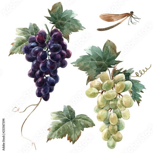 Watercolor grape set Fototapete