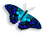 beautiful multicolored butterfly isolated on white background