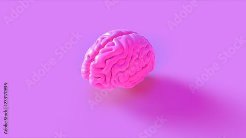 canvas print motiv - paul : Pink Human brain Anatomical Model 3d illustration 3d rendering
