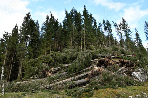 Lake Carezza, Bolzano province, South tyrol, Italy Broken trees after a storm #233175721