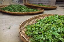 Tea Leaves Drying In Wicker Basket