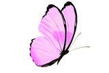 Fototapeta Motyle - beautiful butterfly isolated on white background