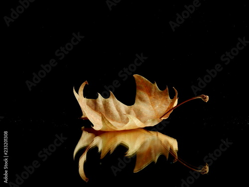 Fotografering  platano foglia autunno
