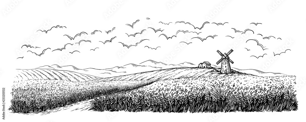 Fototapeta rural field with ripe wheat on background of mill, village and clouds. vector illustration