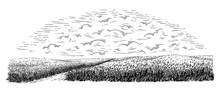 Rural Field With Ripe Wheat On Background Of Clouds. Vector Illustration
