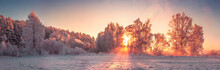 Panorama Of Winter Nature Landscape At Sunrise. Christmas Background