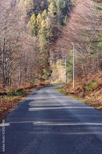 Foto op Plexiglas Weg in bos Beskidy Żywieckie