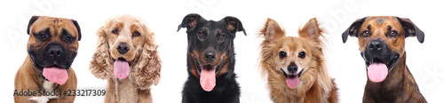 Foto  Group of dogs