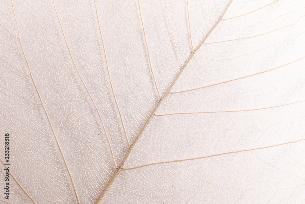 Fototapeta Closeup view of beautiful decorative skeleton leaf