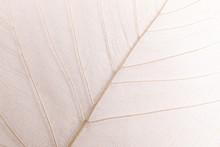 Closeup View Of Beautiful Decorative Skeleton Leaf