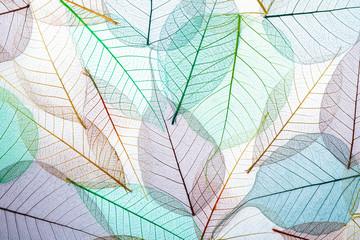 Fototapeta Minimalistyczny Top view of beautiful decorative skeleton leaves