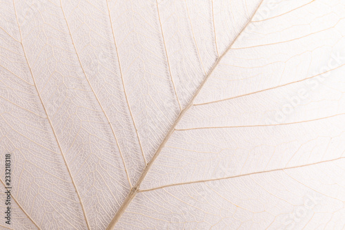 Obraz Closeup view of beautiful decorative skeleton leaf - fototapety do salonu