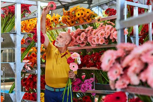 Senior Florist Arranging Gerbera Daisies On Rack