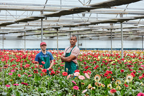 Valokuva Confident Florists Standing Amidst Gerbera Daisies In Greenhouse