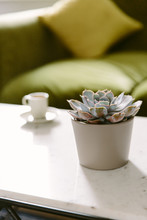 Succulent Plant On A Marble Table