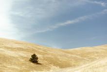 A Lone Tree Amongst Rolling Hi...