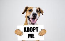 Pet Adoption Concept With Staf...