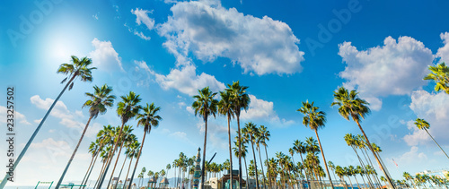 Tall palm trees in Venice Beach in Los Angeles
