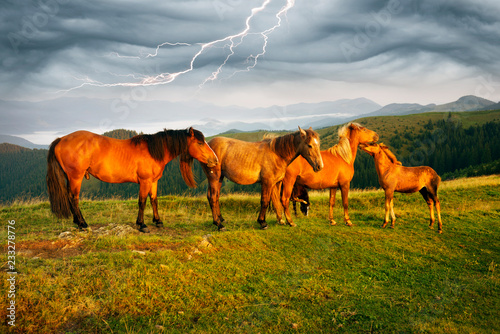 Photo  Horses in the sunlight