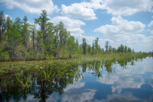 Okefenokee Swamp In Southern G...