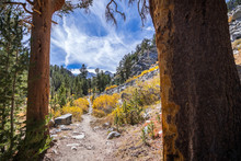 Hiking Trail In The John Muir ...