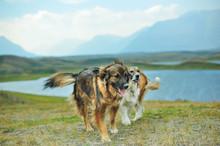 Pets On Vacation On The Alberta Prairies