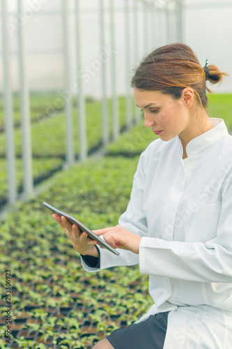 Fototapeta Greenhouse Seedlings Growth. Female Agricultural Engineer using tablet obraz