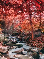 Fototapeta Jesień Autumn mountain landscape beside a swift flowing stream with small waterfalls. Outdoor recreation. Hiking the Appalachian Trail and Blue Ridge Mountains.