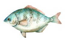 Sea Watercolor Fish