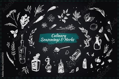Foto Culinary seasonings and herbs. Hand drawn icons