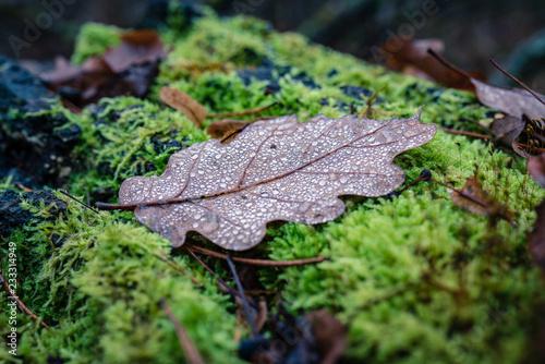Fototapeta Mysterious Misty Dark Forest Late Autumn
