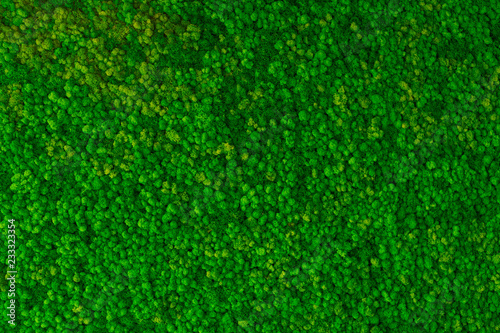 Fototapeta Artificial green moss wall for garden decor. Moss Background Texture obraz