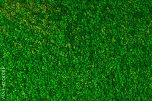 Artificial green moss wall for garden decor Wallpaper Mural