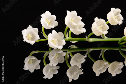 Poster Muguet de mai Single twig of spring flowers of Lily of the valley isolated on black background