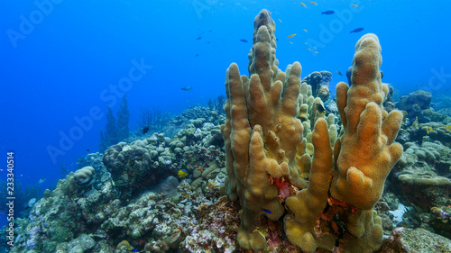 Staande foto Koraalriffen Seascape of coral reef in Caribbean Sea around Curacao at dive site Smokey's with pillar coral and sponge