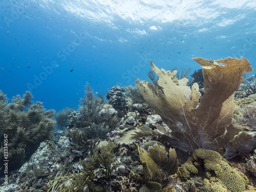 Seascape of coral reef in Caribbean Sea around Curacao at dive site Smokey's with sea fan, various coral and sponge