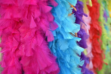 Plumes Multicolores Pour La Sc...