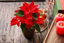 Christmas Flower Poinsettia With Burning Candles On Wooden Table
