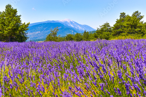 Photo  mountain Mont Ventoux with lavender field in foreground, village Ferrassières, P