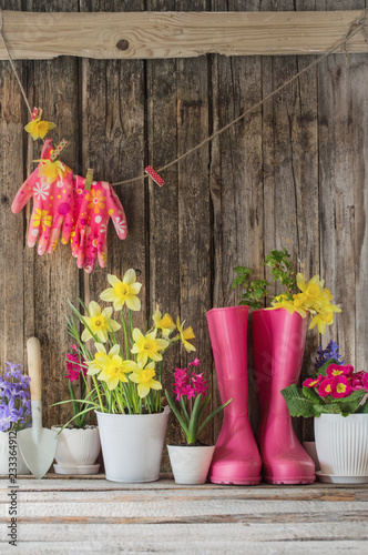 obraz lub plakat rubber boots and spring flowers on wooden background
