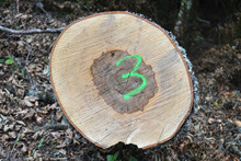 Numéro Trois Fluo Sur Un Tronc, Symbole, Marquage En Forêt, Bûche, Alsace, France