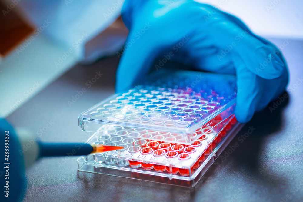 Fototapeta Biotechnology. Laboratory technician working with cell culture