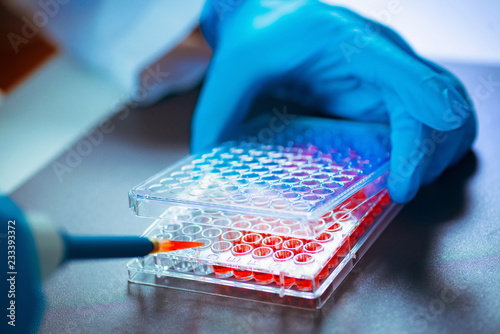 Fotomural Biotechnology. Laboratory technician working with cell culture