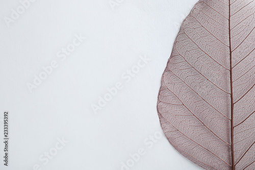 Pinturas sobre lienzo  Beautiful decorative skeleton leaf and space for text on white background