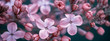 Leinwandbild Motiv  panorama lilac blossoms on branches