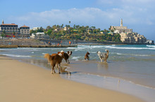 Dog Paradise. Funny Dogs On Beach In Charles Clore Park. Tel Aviv, Israel