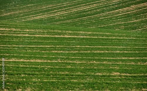 Foto op Canvas Platteland green field landscape