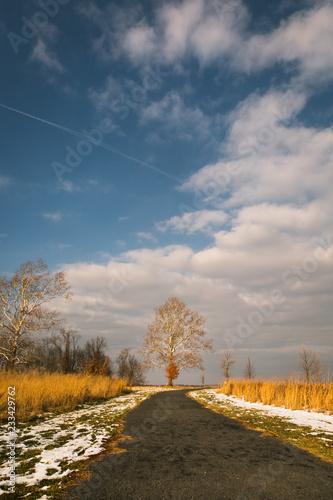 Fotobehang Donkergrijs Tree on trail in winter