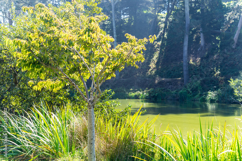 The green Lake view in the Golden Gate Park